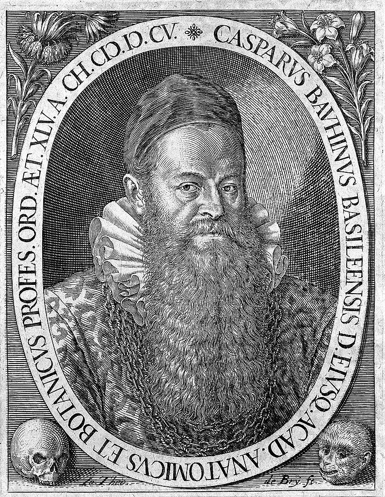 Caspar Bauhin